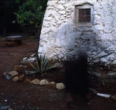 Pio Tarantini Agave e trullo, Salento, 1984